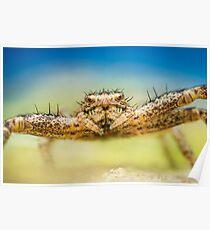 Crab spider extreme closeup Poster