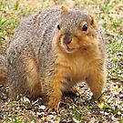 One-eared Squirrel by lorilee
