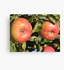 Red Red Apples Canvas Print