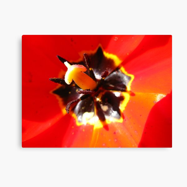 Tulip #2 Canvas Print