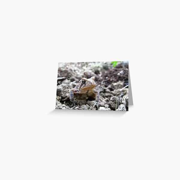 American Toad #2 Greeting Card