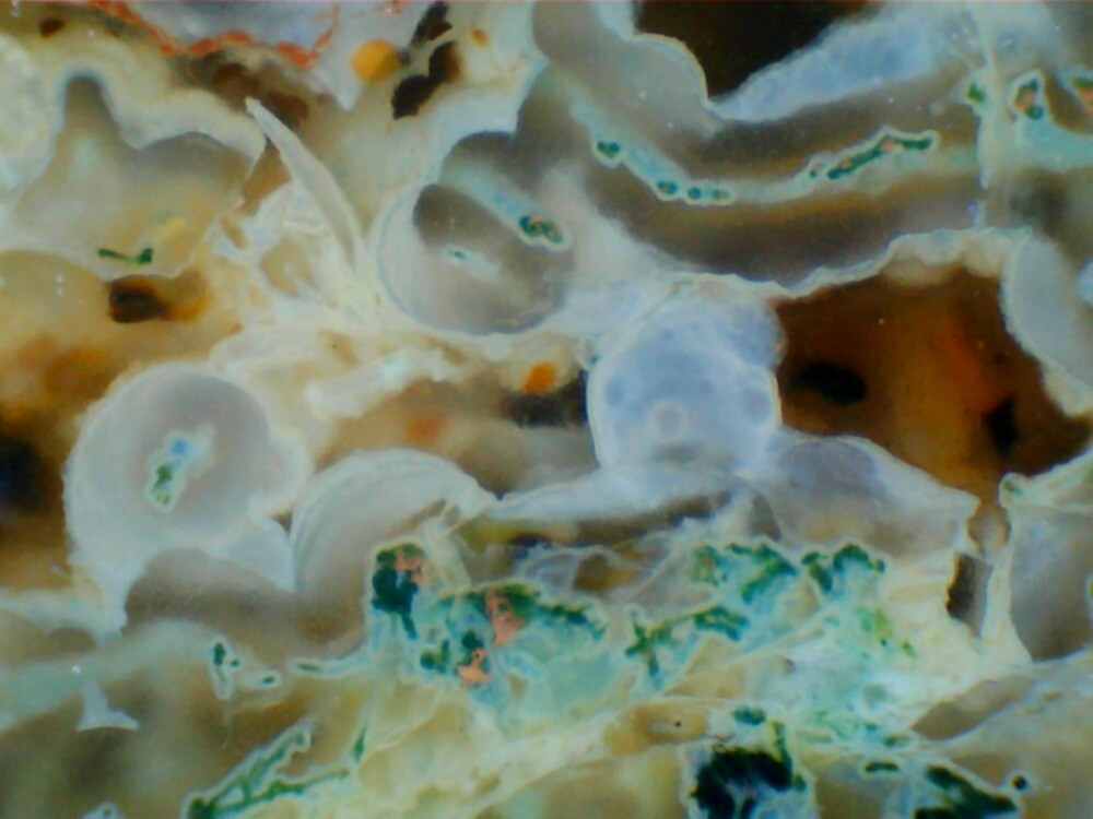 Ecosystem (Moss Agate) by Stephanie Bateman-Graham