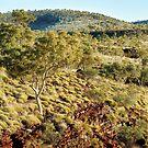 Landscape above Junction pool, Karijini by Colin White