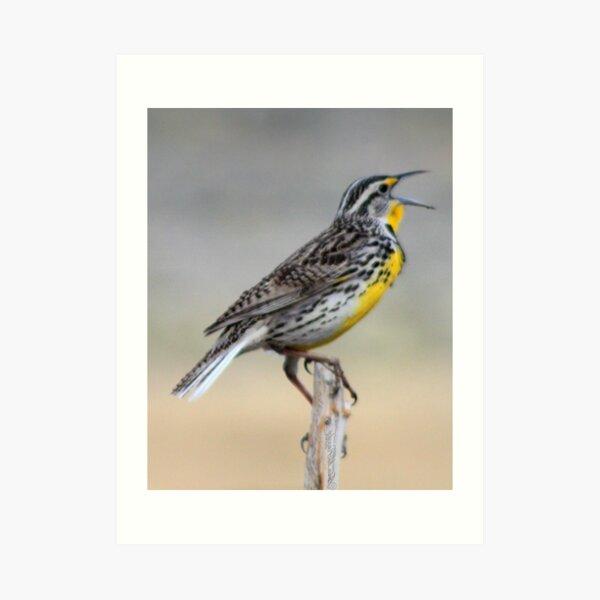 Lonely Meadowlark Art Print