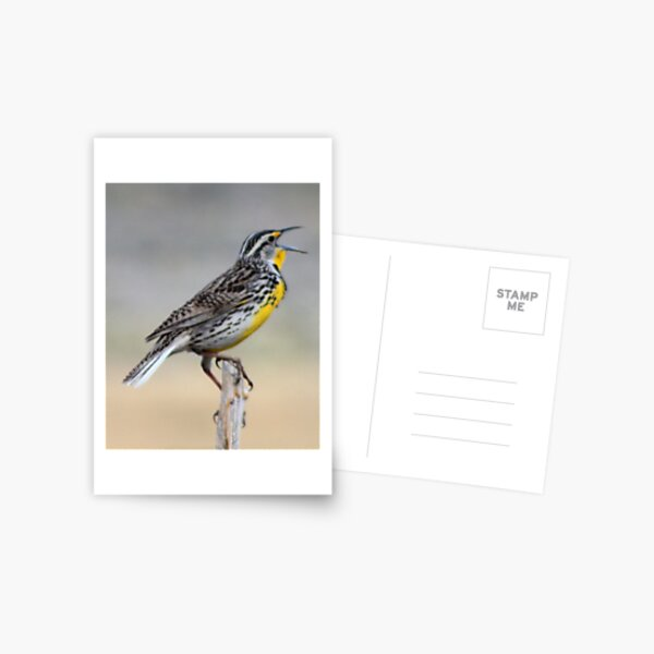 Lonely Meadowlark Postcard