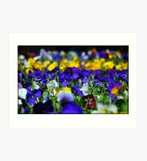Finely Spring!! Art Print
