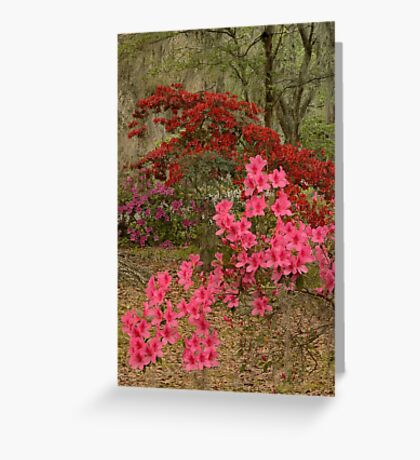 The Azaleas In Bloom Greeting Card
