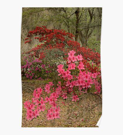 The Azaleas In Bloom Poster