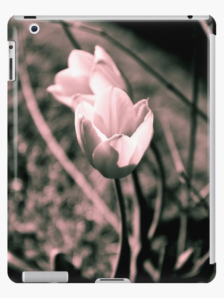 Split Tone Tulips by Bethany Whisenant-Wright