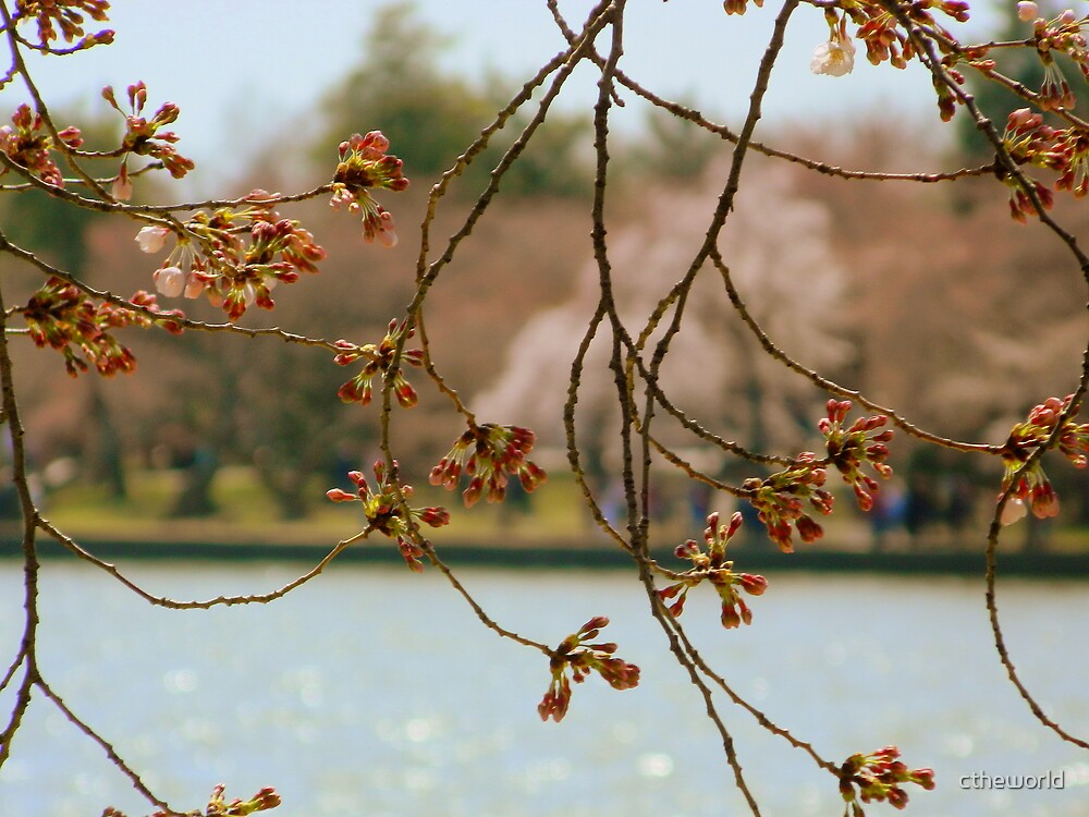 From Across the Pond -Spring by ctheworld