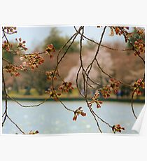 From Across the Pond -Spring Poster