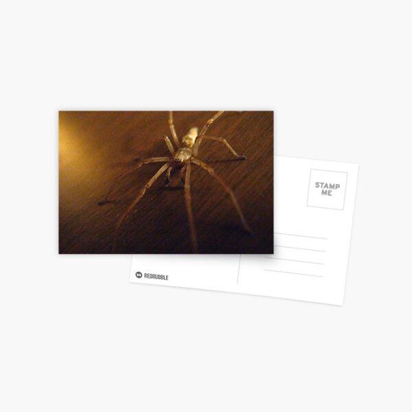 Wolf Spider #2 Postcard
