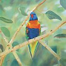 Oil Painting  'Rainbow Lorikeet' on Canvas 40 x 40cm. by Rita Blom