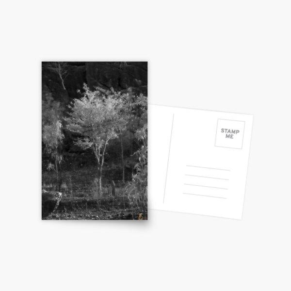 After the Bushfire IR Postcard