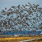 Too much bird by THHoang