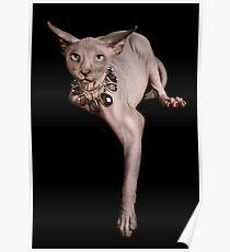 Sphynx Cat Poster