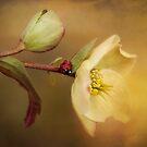 Ladybird..... by Ellen van Deelen