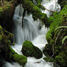 Wahkeena Creek 3040_032505 by Randy Craig (nature & landscape photography)