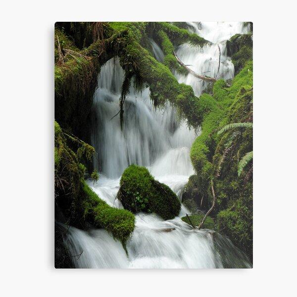 Wahkeena Creek 3040_032505 Metal Print