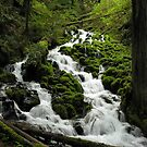 Wahkeena Creek 3112_032505 by Randy Craig (nature & landscape photography)