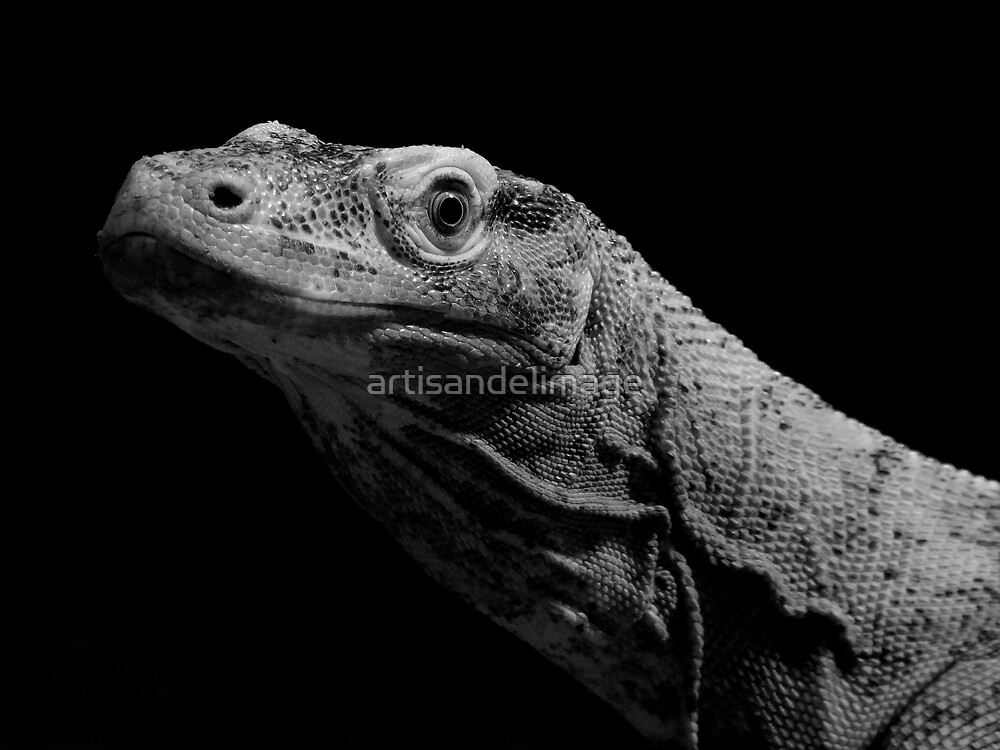 Reptile by artisandelimage