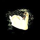 Swan Lake by Chris Goodwin