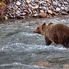 Grizzly River (2) by James Anderson