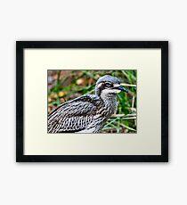 Bush Stone-curlew  Framed Print