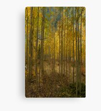 2811 Canvas Print