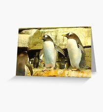Penguin Communicating Greeting Card