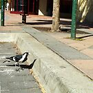Vaguely A Brave Ordinary Mudlark Stands Up For Itself Against Unknown Strangers by Robert Phillips