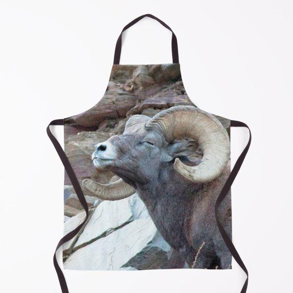 Watercolor Sheep, Bighorn Ram 33, Drake, Colorado Apron