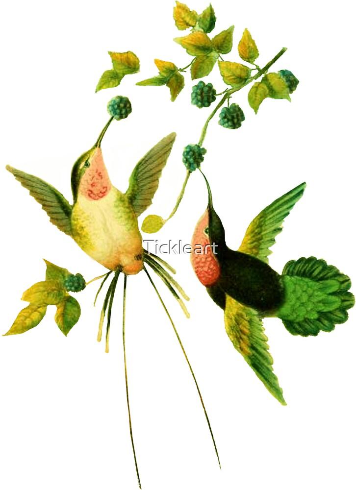 Vintage Hummingbirds by Tickleart