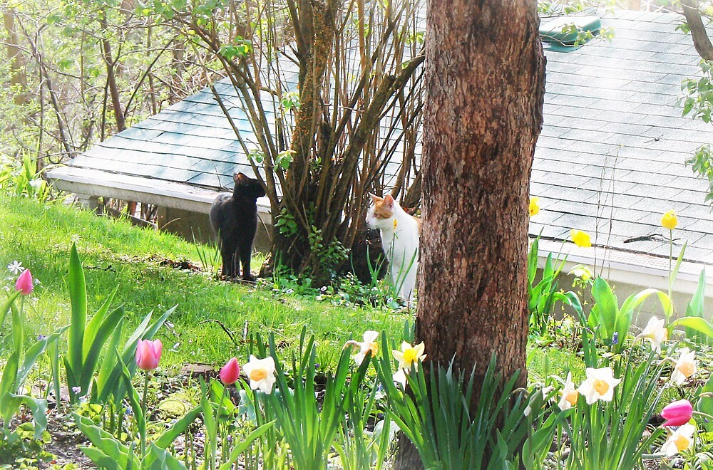 Two Cats in the Yard by Nadya Johnson