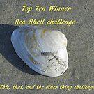 Top Ten Winner - Sea Shells by quiltmaker