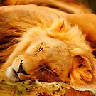 Lions and Tigers and.... by Guatemwc