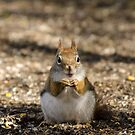 I am not Alvin! by vasu