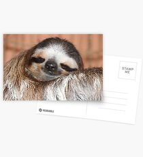 Buttercup the Sloth Postcards