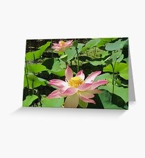 Beautiful Lotus Flower, Botanic Gardens. Adelaide, Sth. Aust. Greeting Card