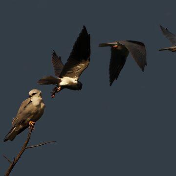 Take Flight. by pixel8ed