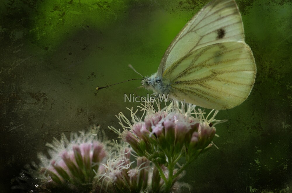 yellow butterfly by Nicole W.