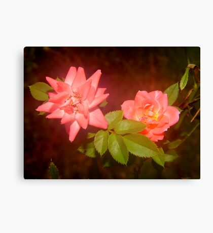 Rosey Glow Canvas Print