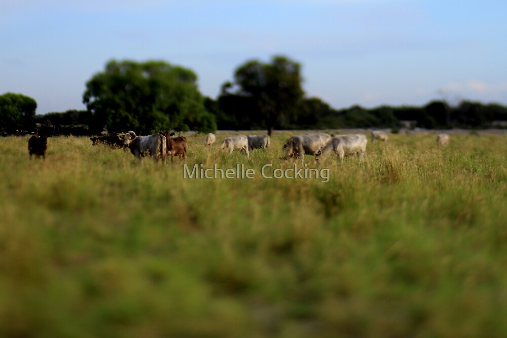 'Miniature' Cows by Michelle Cocking