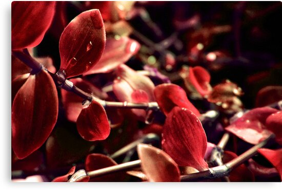 TOUCH OF RED by leonie7