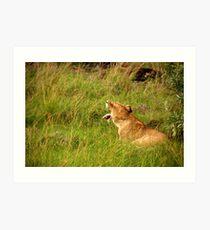 Lion  - Masai Mara Art Print