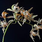 Orchids by Lee LaFontaine