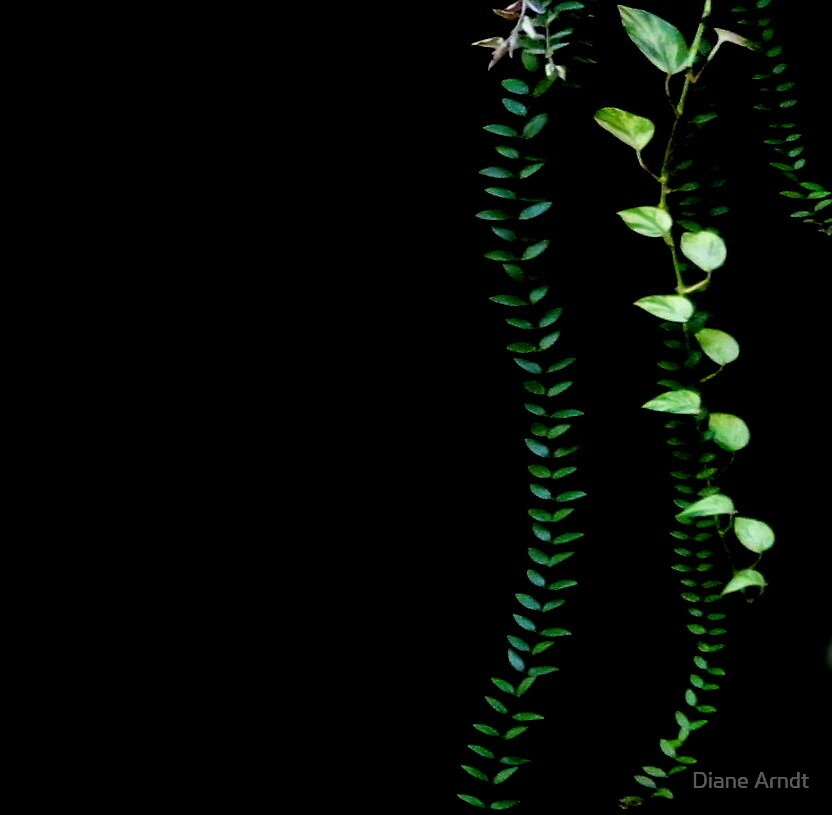 Black With Green by Diane Arndt