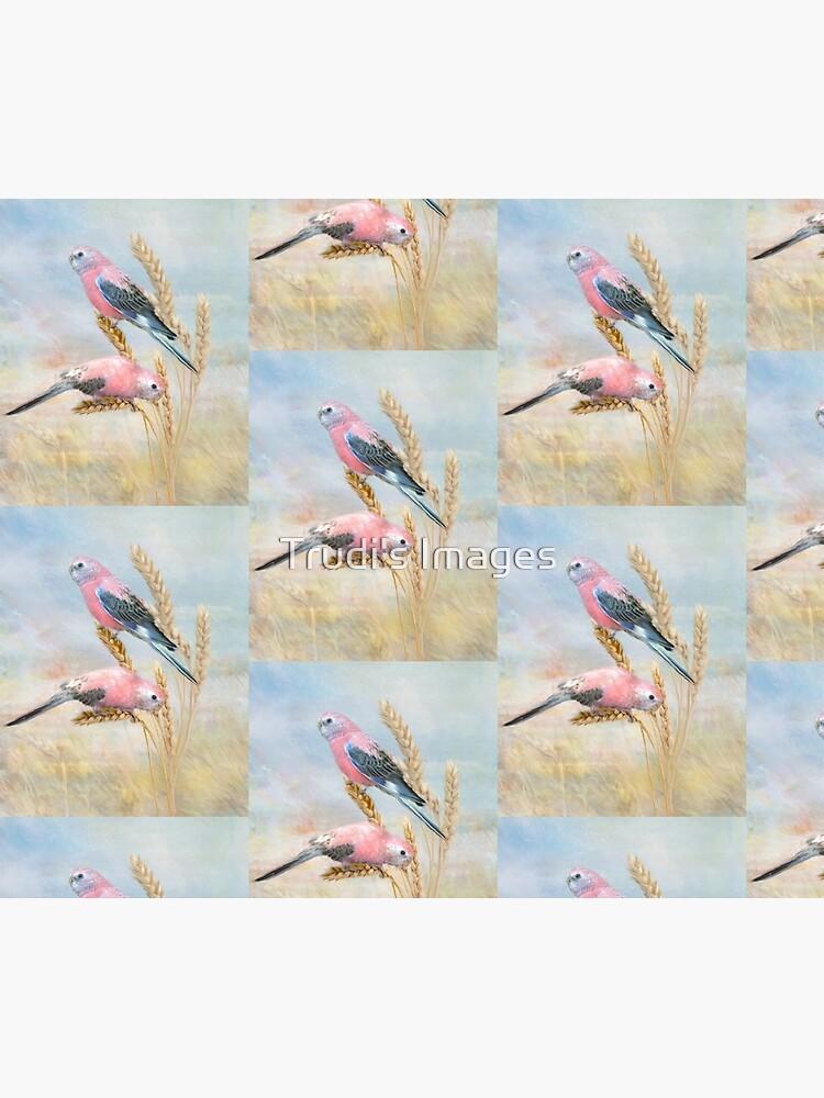 Bourkes Parrot by PicsByT