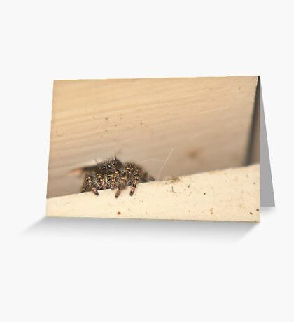 A little macro work Greeting Card