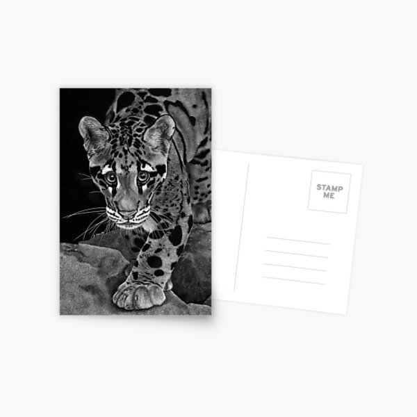 Yim -  The Clouded Leopard Postcard